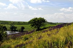 oklarheter räknade den torra steppen för skyen för gräskullligganden Fotografering för Bildbyråer