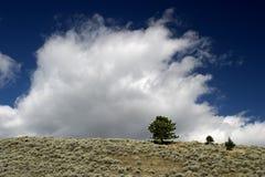 oklarhetsfält montana över stigning arkivfoto