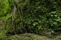 Oklarhetsskog royaltyfria bilder