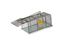 Oklepiec dla szczurów zdjęcia royalty free