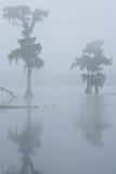 oknówka mgłowy jeziorny ranek Zdjęcie Royalty Free