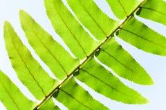 okno czerepu liść rośliny okno Zdjęcia Royalty Free