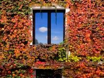 Okno dom czerwony winograd opuszczać. Obrazy Stock