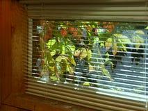 Okno I jesień liście zdjęcie stock