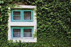 Okno i zieleń bluszcz Zdjęcie Stock