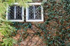 okno na ścianie z liściem roślina Obrazy Royalty Free