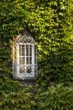Okno przerastający bujny zieleni bluszczem obrazy royalty free