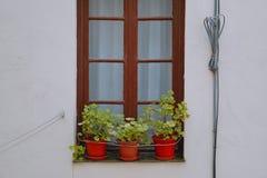 Okno w budynku i fasady fotografia royalty free