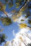 Okno w lesie obrazy royalty free