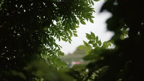 Okno w liściach w lesie zdjęcie wideo
