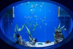 Okno w podwodnego świat Fotografia Royalty Free
