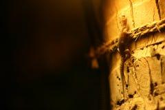 Okno z jalousie akwarium jaszczurka dzikie zwierzę obraz stock