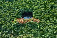 Okno z kwiatami 2 i bluszczem obrazy royalty free