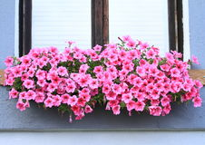 Okno z lila kwiatami Fotografia Stock