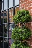 Okno z zieloną roślinnością Obrazy Royalty Free