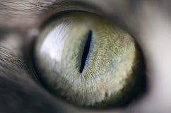 Oko Obrazy Stock