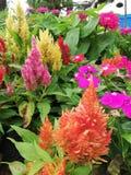 oko cukierku kolorowi kwiaty obrazy royalty free