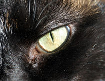 oko do zakończenia kota Obraz Stock
