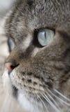 oko jest ostrze kota zdjęcia stock