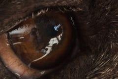 oko jest pies Zdjęcie Stock