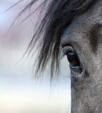 oko koń zdjęcia stock