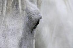oko koń obraz stock
