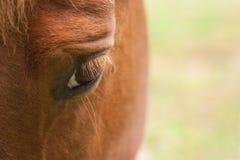 oko koń s Zdjęcia Royalty Free