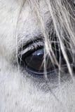 oko koń Zdjęcie Stock