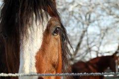 oko koń Fotografia Royalty Free