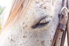 oko koń s Obrazy Stock