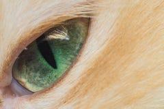 Oko kotów zakończenie Zdjęcie Stock