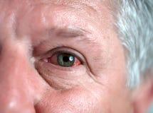 oko krwionośny strzał fotografia royalty free