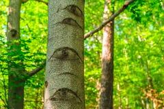 Oko kształtuje na bagażniku drzewo Fotografia Stock