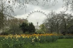 oko London Obrazy Royalty Free