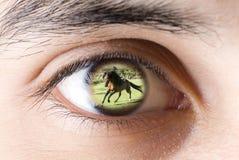 Oko ogląda dzikiego konia mężczyzna Obrazy Royalty Free
