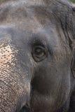 Oko słoń Obrazy Royalty Free