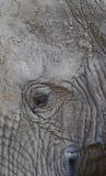 oko słonia zdjęcie stock