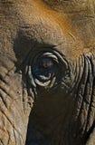 oko słonia Zdjęcia Stock