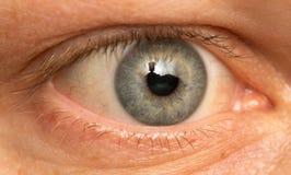 Oko samiec Makro- Obraz Royalty Free