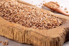 Okokt organiskt stavat korn royaltyfri bild