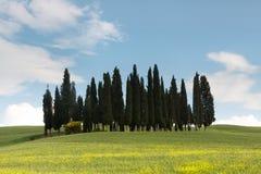 Okrąg cyprysowi drzewa w Tuscany obraz royalty free