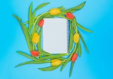 Okrąg czerwoni i żółci tulipany na błękitnym pastelowym tle Obraz Stock