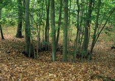 Okrąg drzewa fotografia royalty free