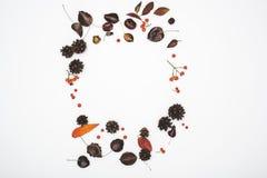 okrąg od jesień liści obraz royalty free