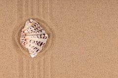 Okrąg robić piasek z seashell Z pustą przestrzenią zdjęcia royalty free