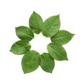 Okrąg robić zieleni liście obraz stock