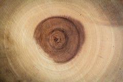 Okrąg tworzący od natury drewno wzór i wskazuje wieka drzewo zdjęcia stock