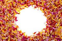 Okrąg wśrodku płatków Zdjęcia Royalty Free