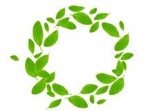 okrąg zieleń Fotografia Stock