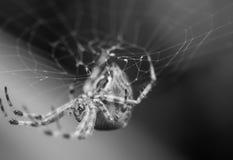 Okręgu pająk Fotografia Royalty Free